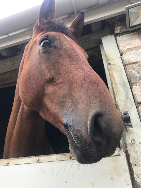 Becky Woolven's Horse Babette